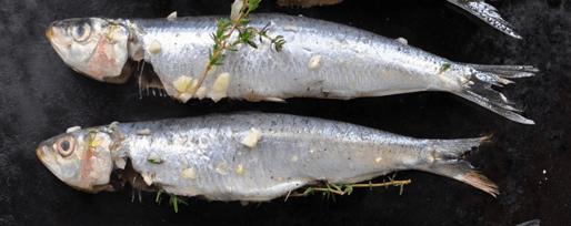 Photo de deux sardines prêtes à griller : proposition de plat à servir au Comptoir des Francofolies - Simon Pointillart Design
